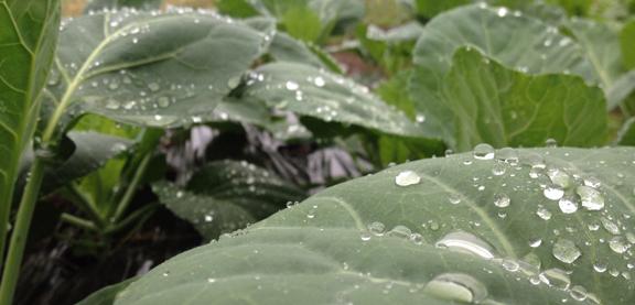 208 rain